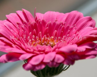 "Pink Flower2 - 8x8"" photograpy print"