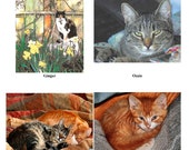 10 Cat Blank Note Cards - Custom Assortment