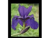 SALE!!! - 10 - Purple Iris  Blank Note Cards