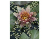 SALE!!! - 10  Pink Water Lily Blank Note Cards