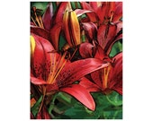 Sale!!!! - 10 Red Asian Lily Blank Note Cards