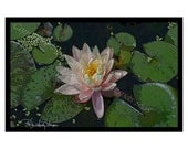 SALE!!!! - 10 Peach Water Lily Blank Note Cards