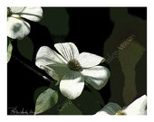 SALE!!! - 10 - Blank Note cards - Dogwood
