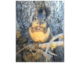 Sale - 10 Douglas Squirrel  Blank Note Cards