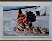 Mother Hen and Baby Chicks Photo Greeting Card