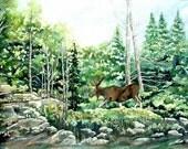 Isle Royale Moose Watercolor Reproduction