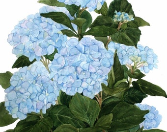 Blue Hydrangea Watercolor Garden Reproduction