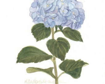 Blue Hydrangeas Original Watercolor