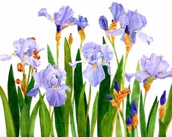 Iris Field Original Watercolor Garden