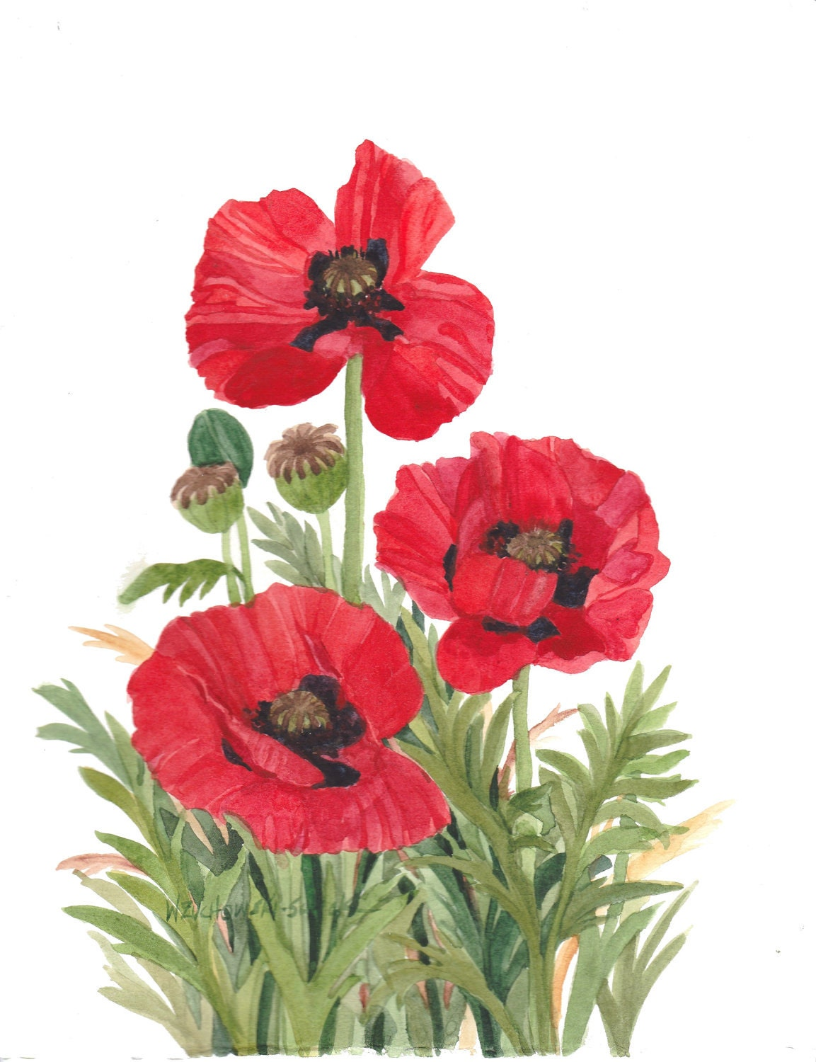 Red Poppy Original Watercolor Painting Flower painting Red |Watercolor Poppies Pink