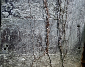 Abstract Fine Art Photography Rural Decayed Barn Grey, Barn Vines 8x12