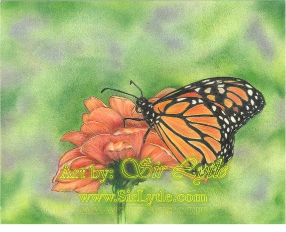 Items similar to Butterfly (Colored Pencil Drawing) Print ...