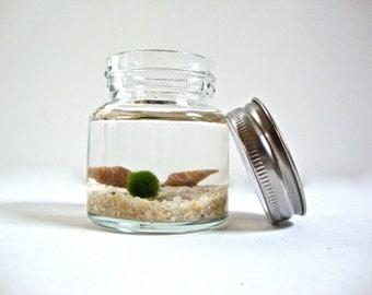 Mini Jar Marimo Moss Ball Aquarium, Underwater Moss Terrarium, Marimo Moss Ball Jar Garden, Marimo Terrarium Garden Decor