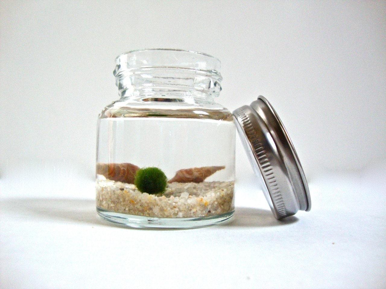 Mini jar marimo moss ball aquarium underwater moss terrarium for Mini aquarium boule