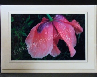 Thank You, Birthday Card, Delicate Pinks Purple Dew Oriental Poppy Flower Raindrops, Mother's Day, All Occasion, Blank Photo Greeting, Card