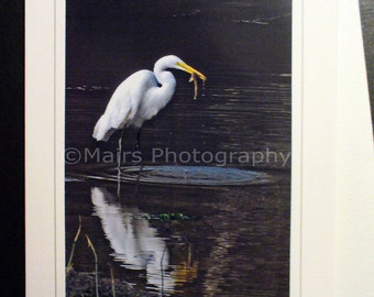 Great Egret, Bird, Pond, Fish, Bird Photography, All Occasion, Blank Greeting Card, Photo Card
