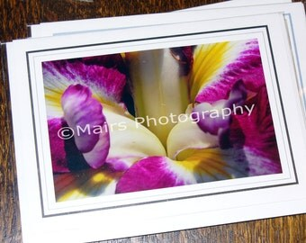 Yellow White Magenta, Japanese Iris, Flower Photography, MOTHERS DAY, All Occasion, Blank Greeting Card, Photo Card, Original Photograph