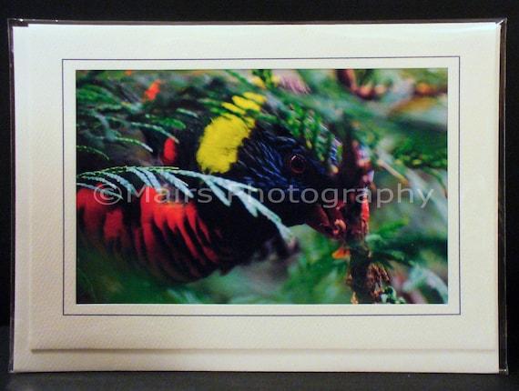 Red Blue Yellow Green Bird Lorikeet, All Occasion, Blank Greeting Card, Photo Card