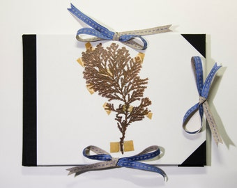 Drawing pad portfolio, with a unique print of dried plants: Pinophyta