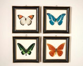 Set of 4 Framed Butterfly Prints by Turner Manufacturing Corporation