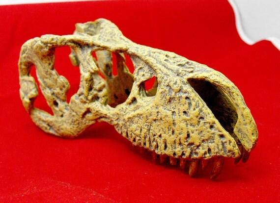 Dinosaur skull in flexible plastic. A very cool fossil replica. Very realistic. Tyrannosaurus rex head with teeth