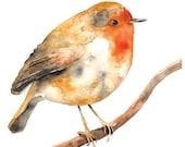 Rockin' Robin Watercolor Illustration Bird Print Orange Brown Feather Nature Branch