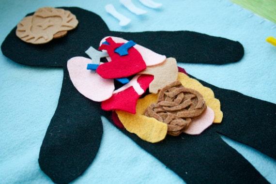 Human Anatomy Felt Set - Science Toy - Educational Felt Story - Flannel Board - Child Life - STEM