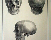 RESERVED FOR JAMES: Posters, Set of 3 Anatomical Posters by Bernard Siegfried Albinus
