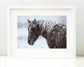 Winter Horse Photograph . Nature Print . Winter . Photo Deco . Nature Wall Art . Fine Art Photograph . Horse Photograph