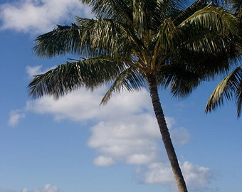 Beach Photography - Palm Tree on a Hawaiian Beach, Summer, 8x12 fine art photography