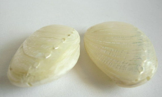 2 real shell beads 47mm (last two)