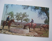 Vintage UNUSED Postcard - Mexican Vaqueros or Cowboys - Texas Longhorn