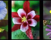 Wildflower Photo Card Set - 5 Photo Greeting Cards