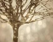Snow Bokeh Autumn Lights Dreamy Beige Tan Tree 8x10 Photography Print