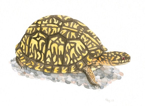 Original Turtle Painting, Nature Art, Box Turtle Painting, Wildlife Illustration, Original Turtle Art, Brown and Yellow Art, Gouache, 8X10