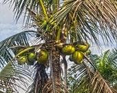 Arecaceae Palm Tree 8 x 12 HDR Metallic Print