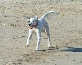Beach Dog Patch Blank Photograph Greeting Card