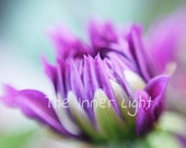 Com Ci Com Ca dahlia flower fine art photography home decor purple bokeh blur abstract macro nature