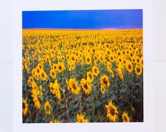 Sunflowers, Field, Greeting Card, Photographic, Blank, Paper, Handmade, Horizontal
