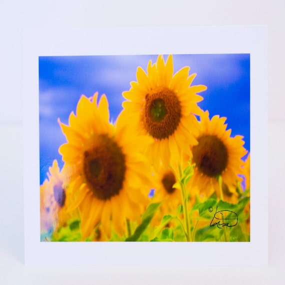 Sunflowers, Greeting Card, Photographic, Blank, Paper, Handmade, Horizontal