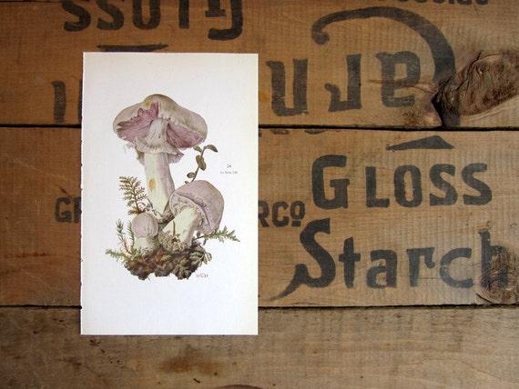 German Mushroom Print, Fungus Identification Book Plates, Natural History, Schaf-Egerling and Wiesen-Egerling