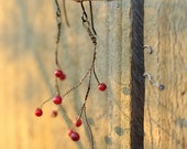 Vermillion berries (Natural antique bronze twisted branch earrings)