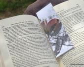 Laminated Photo Bookmark - Pink Dogwood