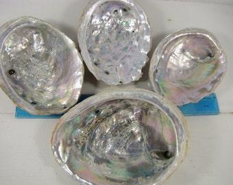 four beautiful Abalone shells