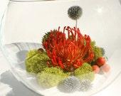 Care-Free Fishbowl Protea Terrarium