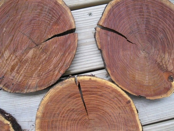 Reserved -Tree Slices-Trivet-Coaster-Cake stand