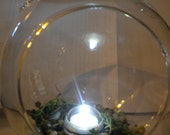 Submersible  LED Light plus Bonus Succulent Cuttings for Fairy Garden Terrarium-Modern Decor - Wedding Centerpieces