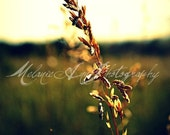 Prairie Wild - Color Fine Art Photo 8x12