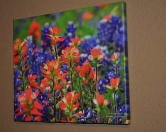 Love Those Texas Wildflowers