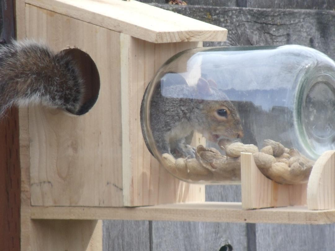 Squirrel Feeder Deals On 1001 Blocks